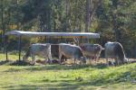 Predavanja s seminarja o ekološki reji goveda