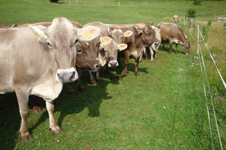 Zveza rejcev govedi rjave pasme Slovenije Vas vabi na 27. občni zbor,