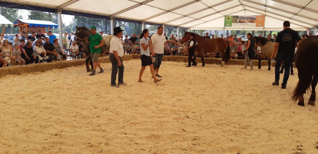 Ocenjevanje slovenske hladnokrvne pasme konj