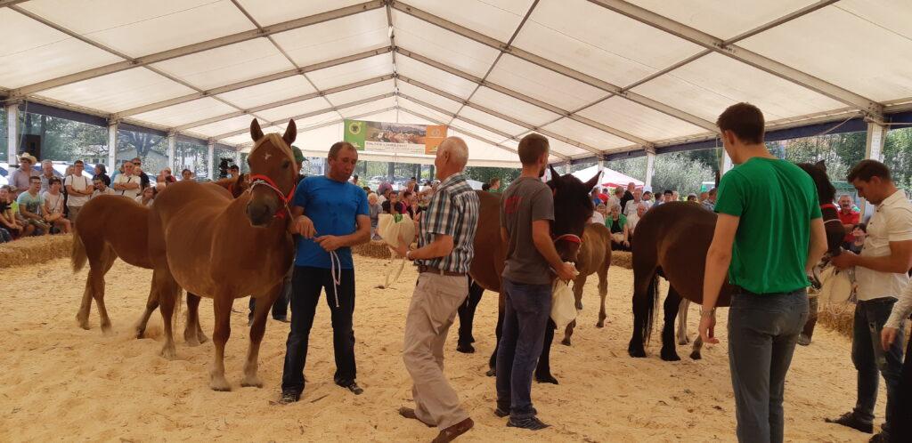 Podeljevanje nagrad za pasmo slovenski posavski konj