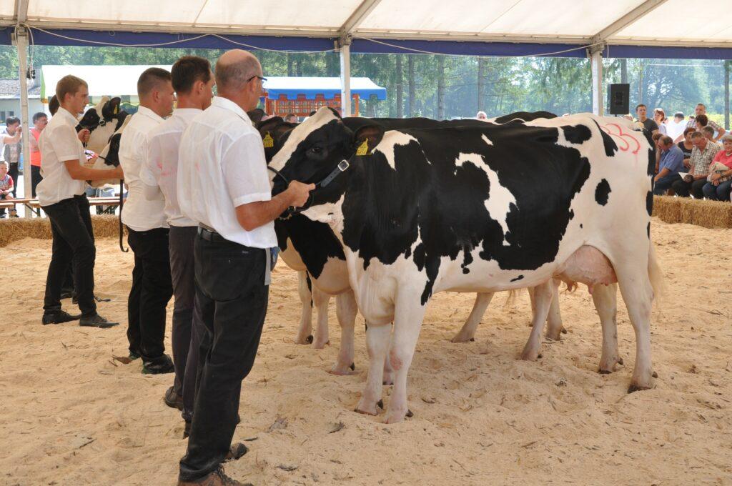 Maša, rejec Jurij Zidar, 1. mesto krave, ŠAMPIONKA in ŠAMPIONKA VIMENA ČB pasme