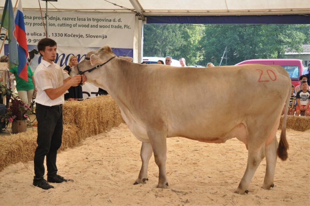 Sopranka, rejka Frančiška Rigler, 1. mesto starejše krave RJ pasme