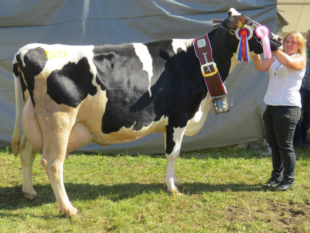 SAVINJA, 1. mesto v kategoriji starejših krav črno bele pasme, rejec Alojz Rožič