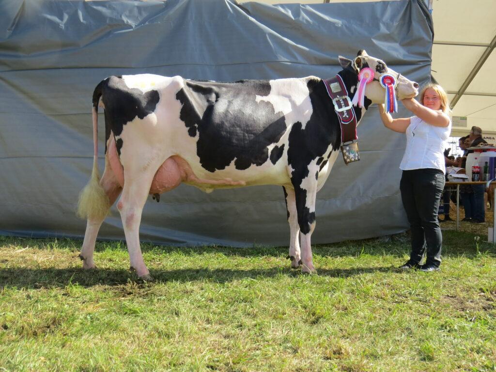 EVELYN, ŠAMPIONKA črno bele pasme in 1. mesto v kategoriji mlajših krav črno bele pasme, rejec Jakob Napotnik