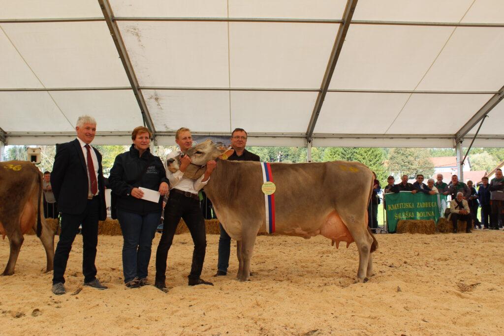MINEA, ŠAMPIONKA vimena rjave pasme, 1. mesto v kategoriji starejših krav rjave pasme, rejec Janez Anželak