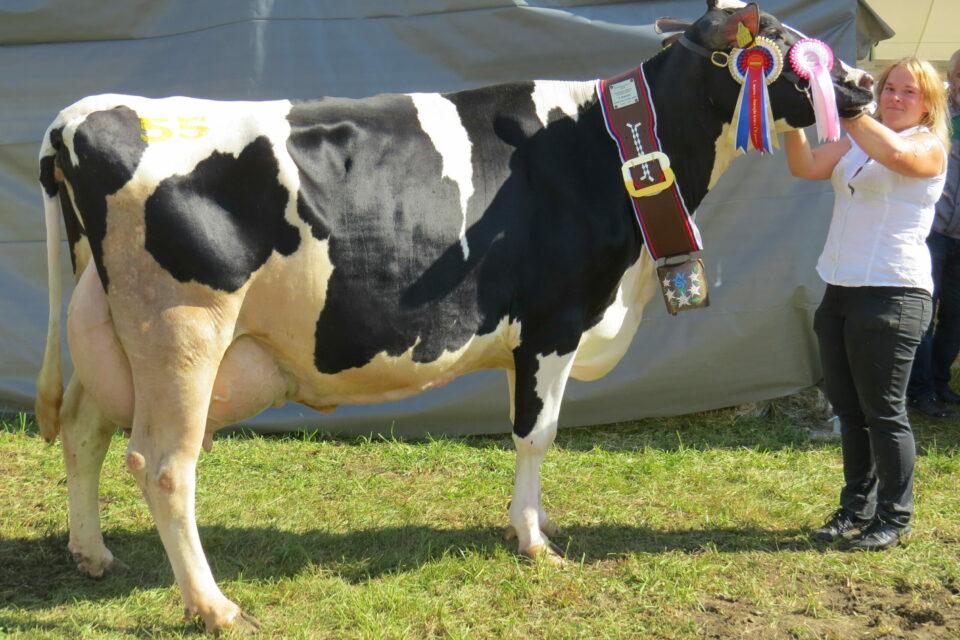 Rezultati kontrole prireje mleka in mesa 2019